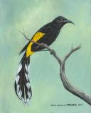 Hawaiʻi ʻōʻō Bird