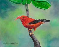 Hawaiian Bird Iiwi