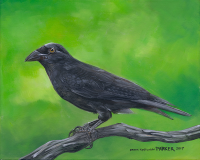 Hawaiian Crow Alala