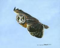 Hawaiian Owl Pueo Flight