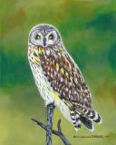 Hawaiian Owl Pueo