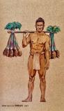 Hawaiian Kalo Farmer